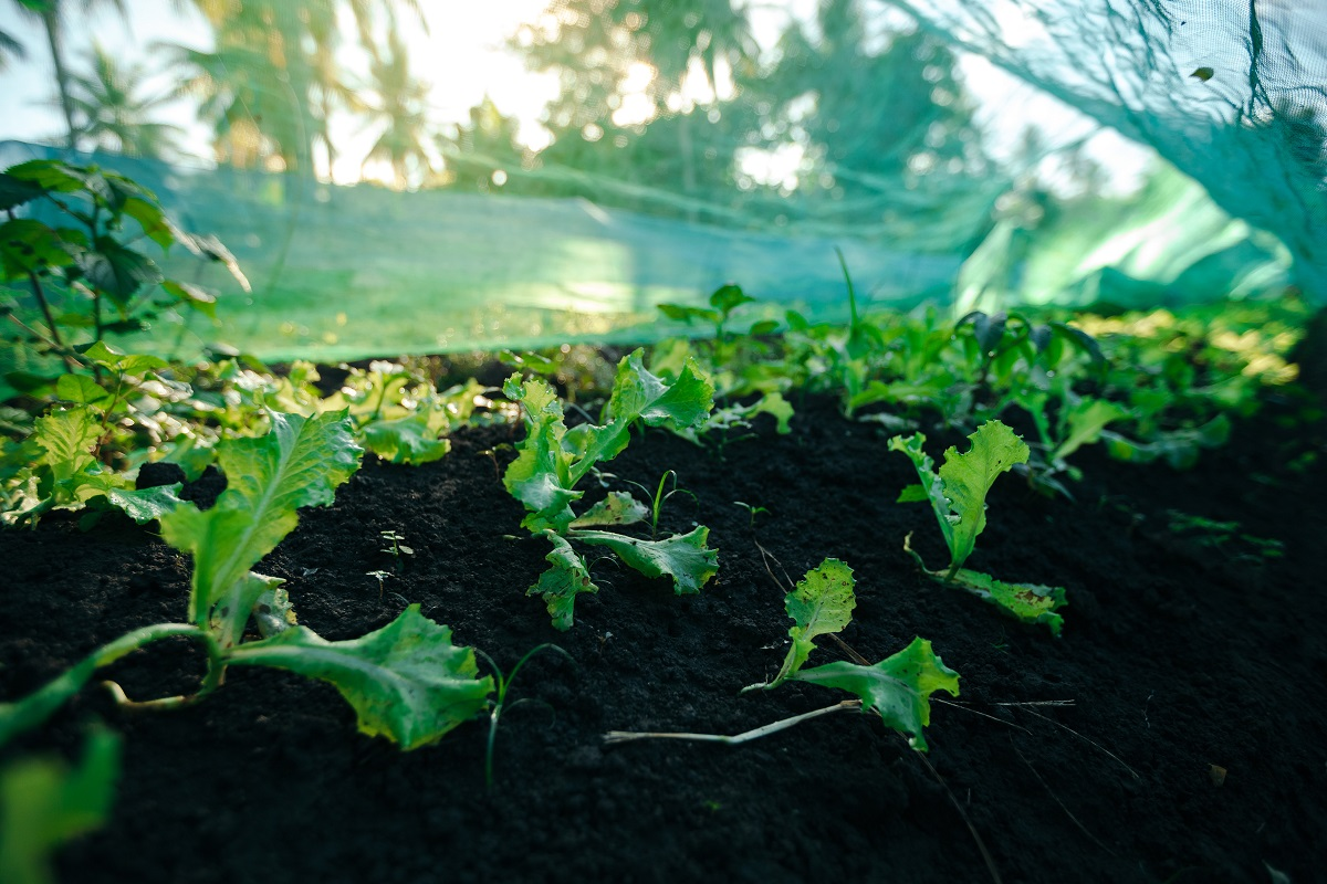 At Eartbeat Farms, you can also find a variety of culinary herbs like parsley and basil