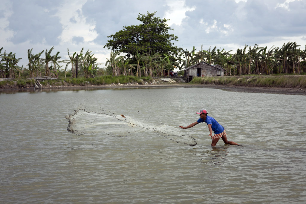 Sustainable agriculture can be replicated anywhere depending on the water condition