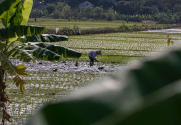 Here's everything you need to know about the Rice Tariffication Law or Republic Act 11203