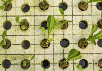 Aquaponics solves the two main problems posed by aquaculture and hydroponic systems