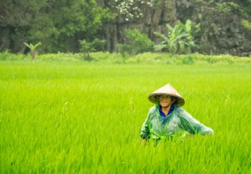 Climate smart agriculture increases resilience against climate change