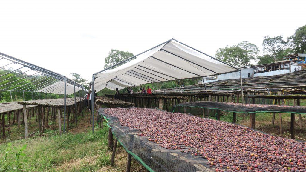 In coffee farming, the farmer is indeed the hero