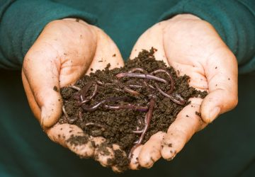 By practicing composting, businesses can manage waste better as well as potentially lower waste disposal and hauling costs