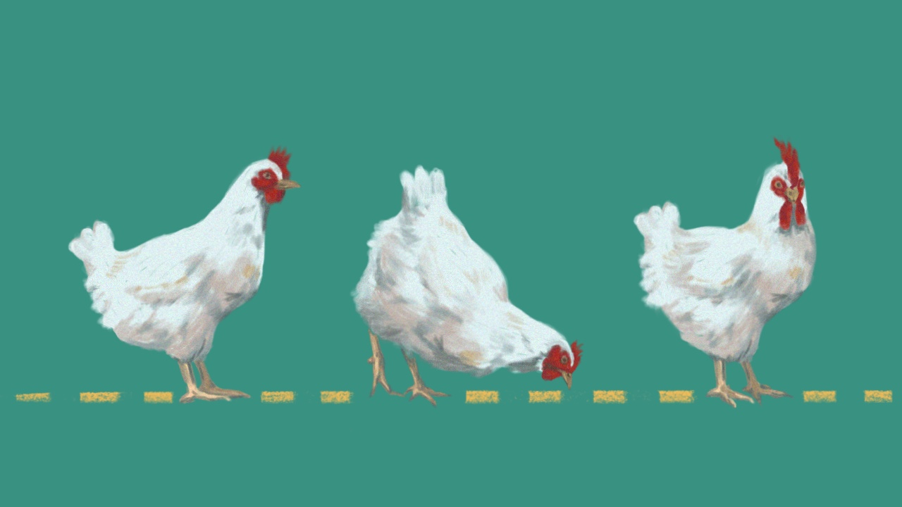 Despite the effort it takes to care of poultry, this can help you live sustainably. Here's what to know if you're planning to raise chickens