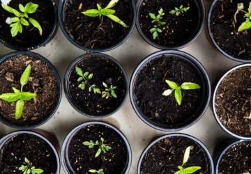 Growing your own vegetable garden can turn things around for you and your business