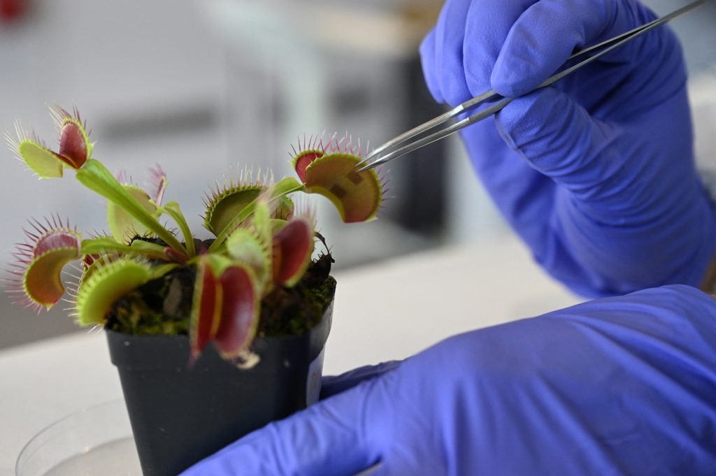 Communicating with vegetation? These scientists are studying it
