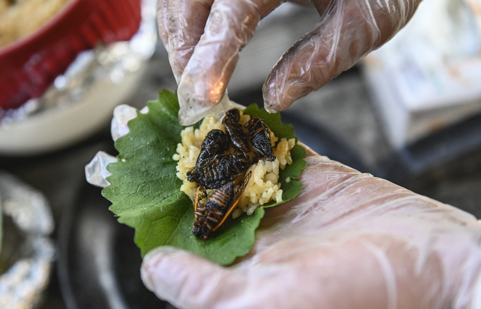 Fried cicadas are rolled into a sushi roll by chef Bun Lai at Fort Totten Park in Washington, DC on May 23, 2021