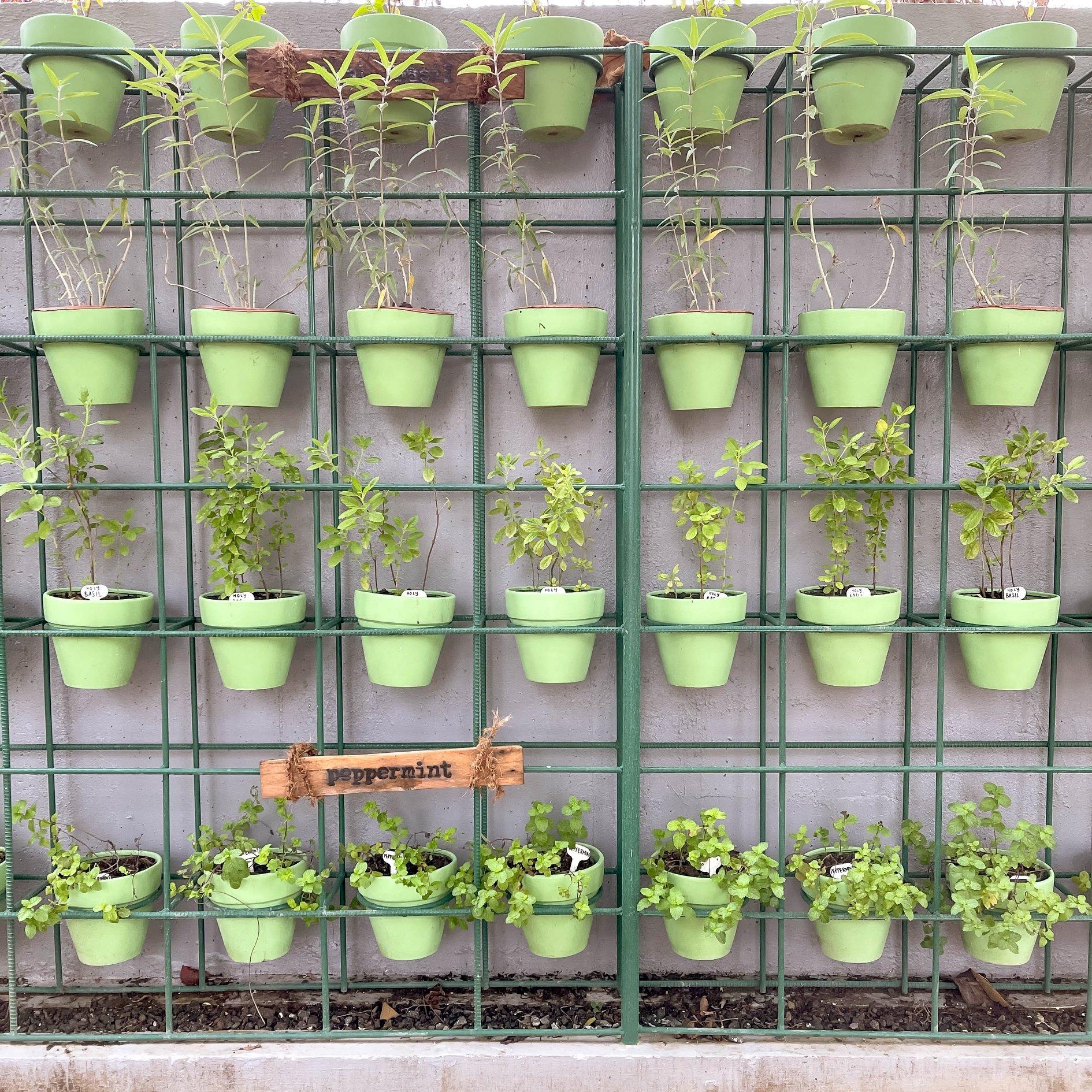 Circa 1900's own vertical herb garden