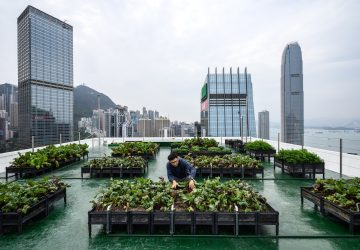 More than 60 farms have sprouted across Hong Kong since 2015