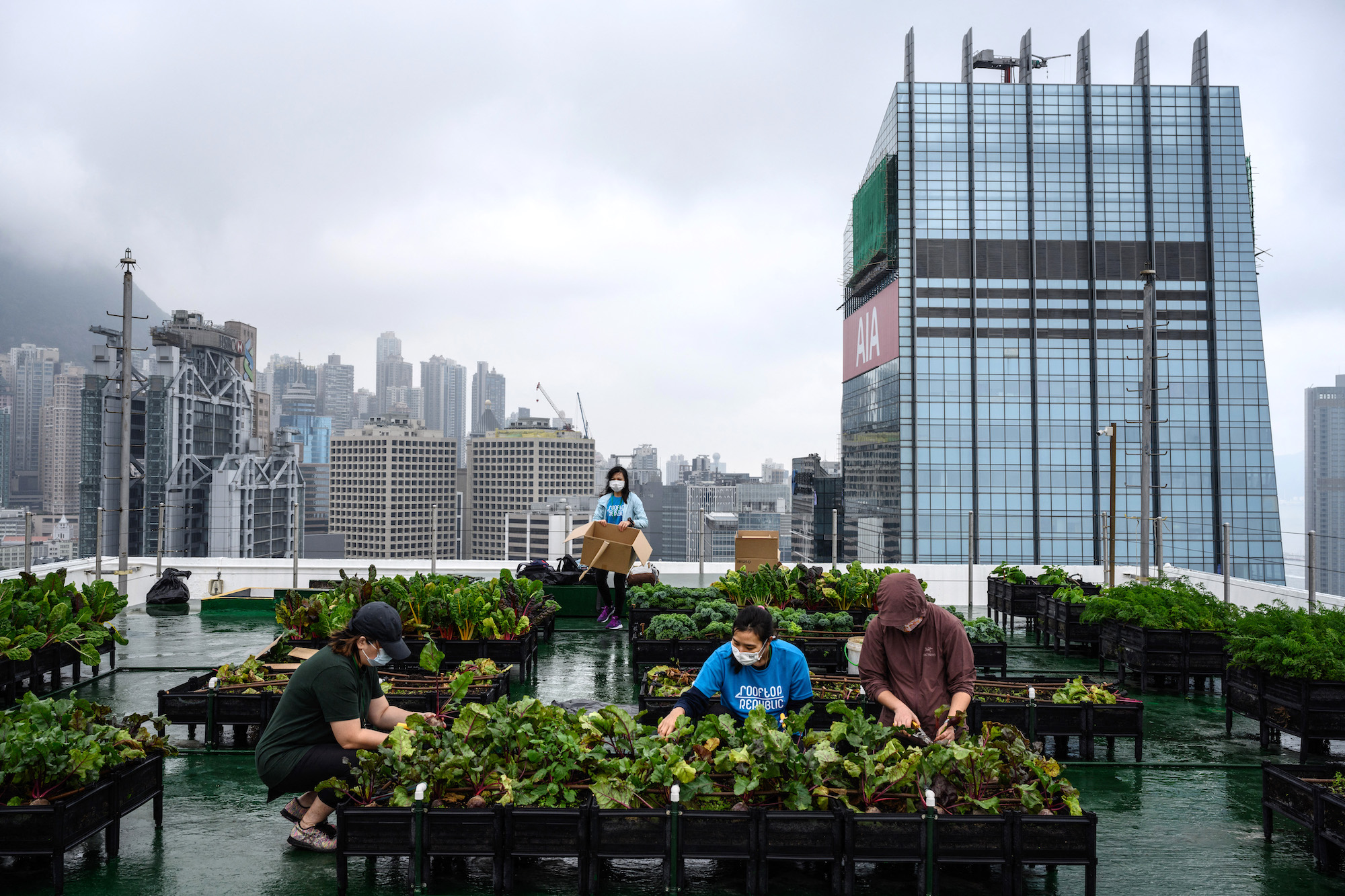 Sadly, not many Hong Kong citizens are interested in growing their own food